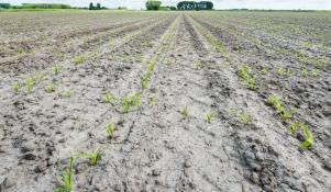 Gleba gliniasta jak ulepszyć