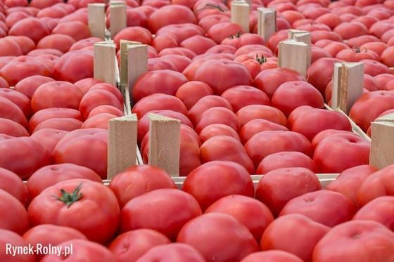 Pomidory Malinowe Cenione I Chętnie Kupowane Odmiany Pomidora