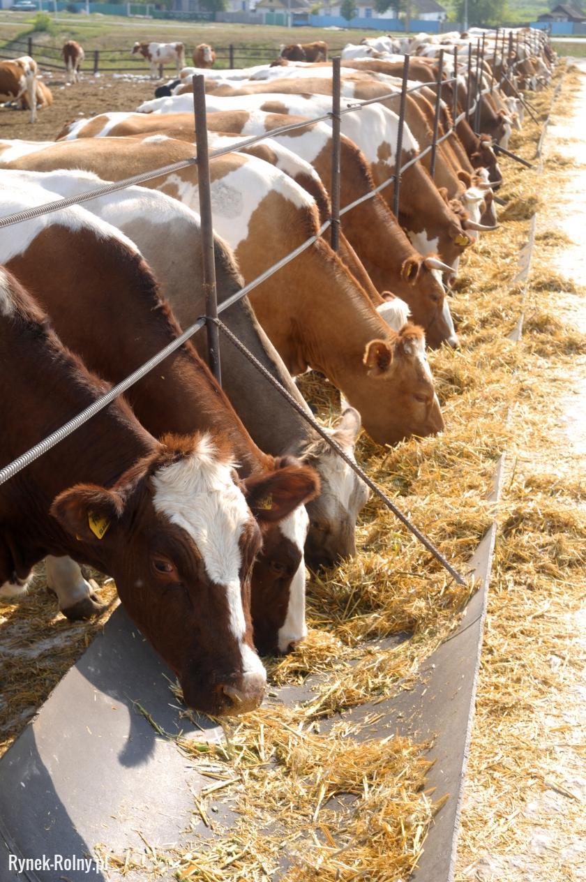 Кормушка для коров фото