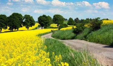 Młodzieńczy Żyto jare - wymagania i sposoby uprawy popularnego zboża - Rynek Rolny GR25